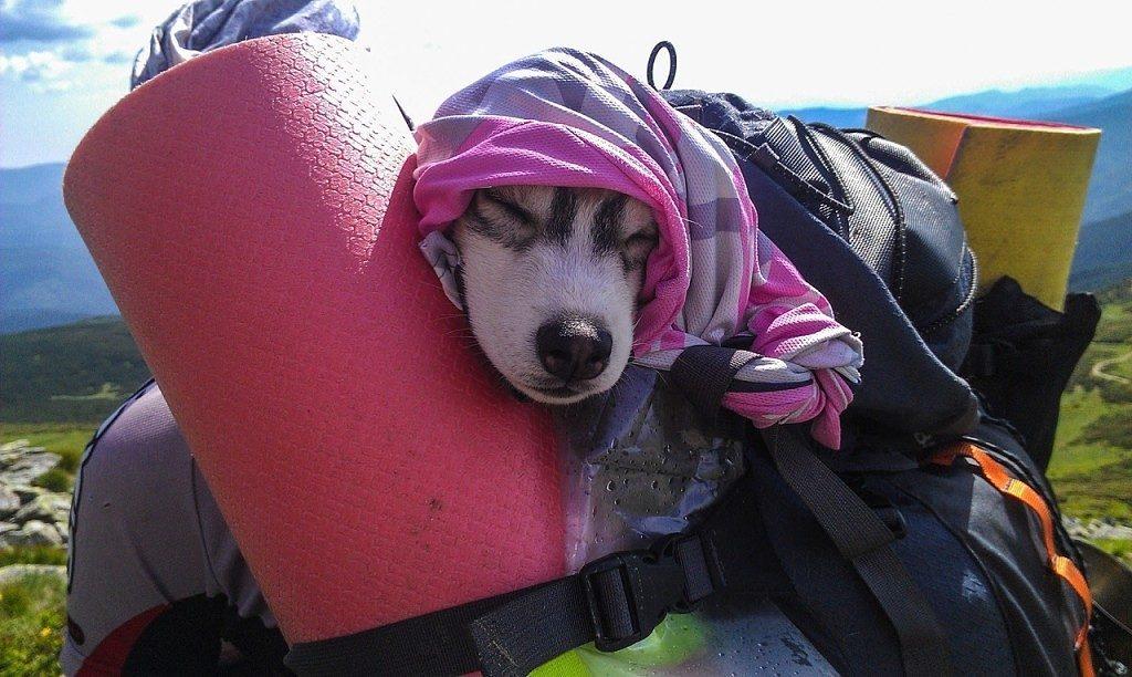 Какие собаки подходят для похода?