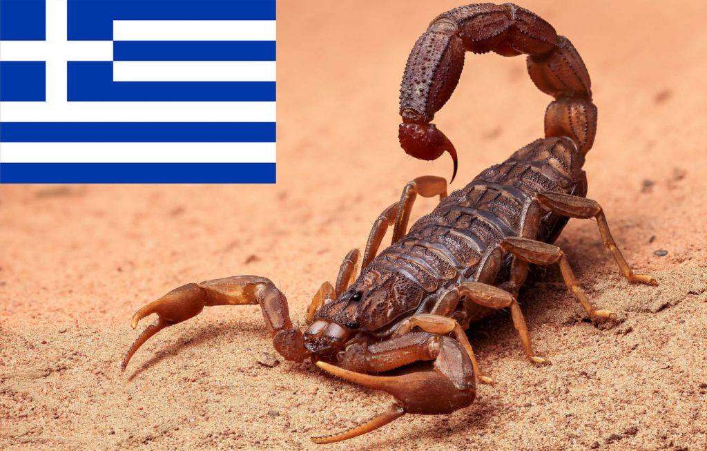 Едем в Грецию — что делать, если укусил скорпион?
